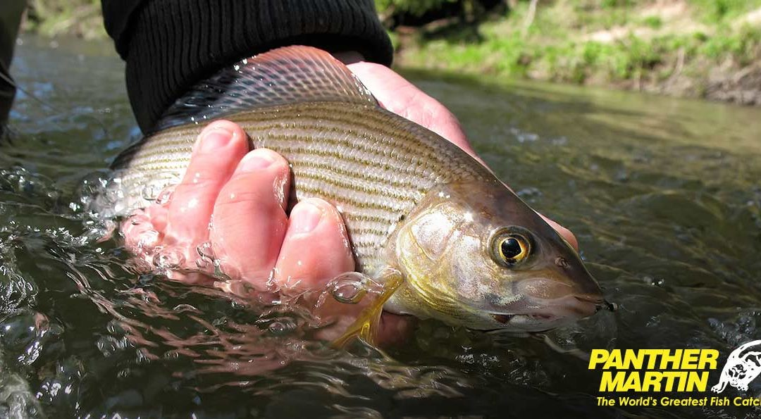 Catch Grayling with Panther Martin